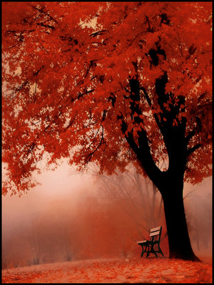 under_red_tree_by_saligia.jpg (300x400, 50Kb)