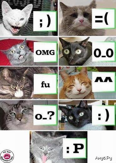 1133724793_anub_ru_cats.jpg (370x520, 41Kb)