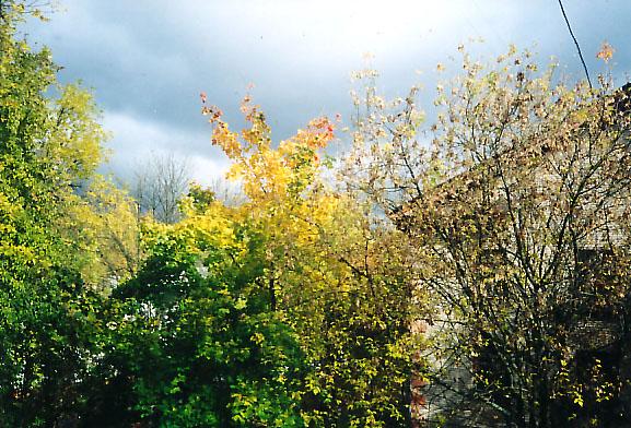 Осень.jpg (577x392, 142Kb)