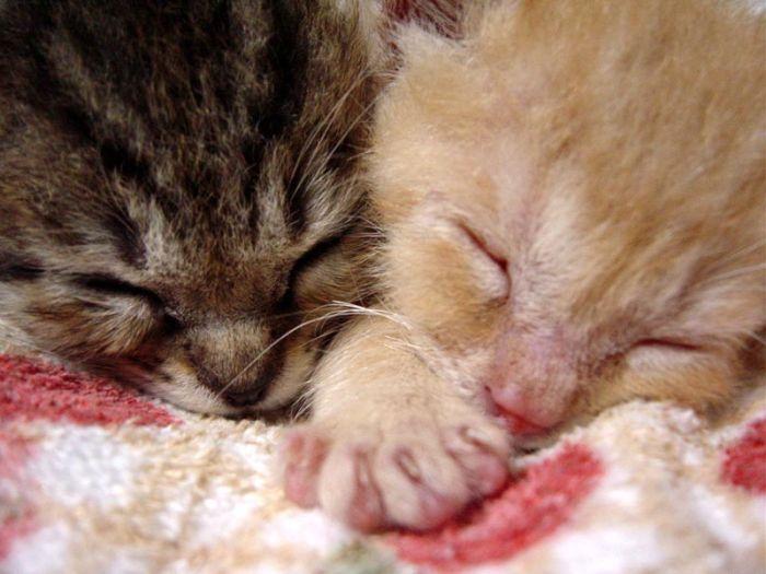 kittens_08.jpg (700x525, 55Kb)