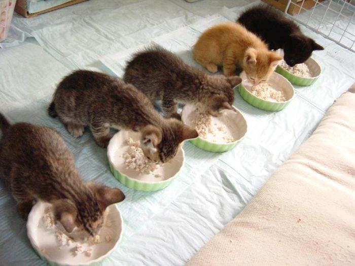kittens_20.jpg (700x525, 54Kb)