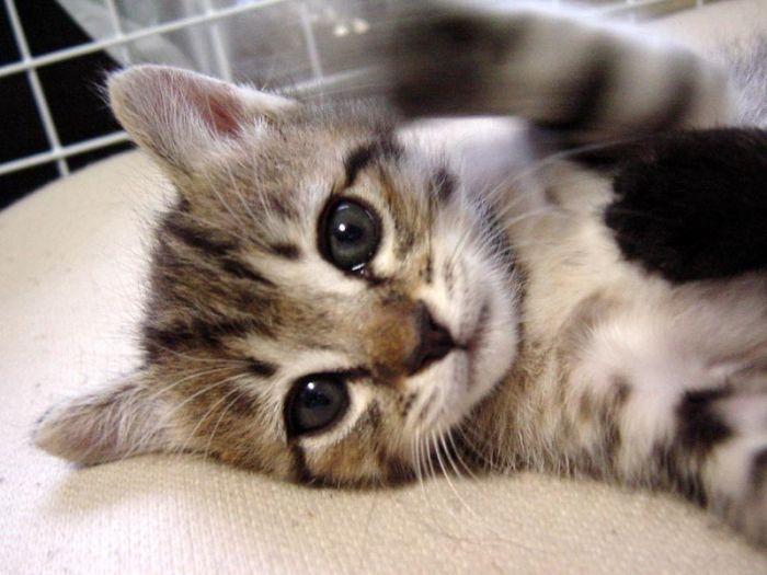 kittens_29.jpg (700x525, 52Kb)