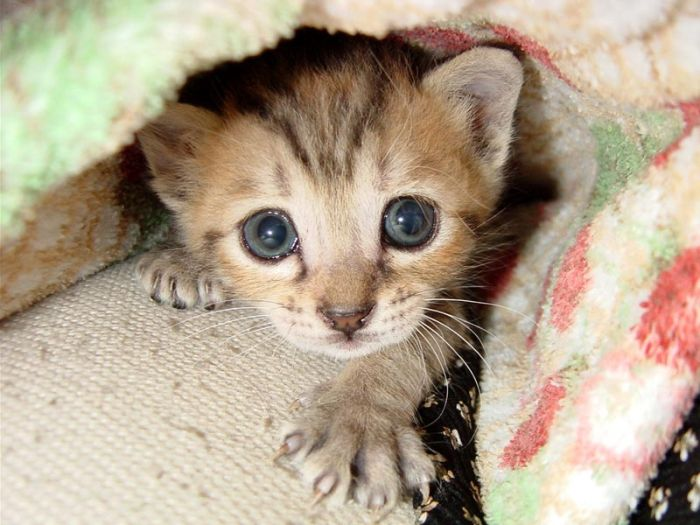 kittens_51.jpg (700x525, 64Kb)