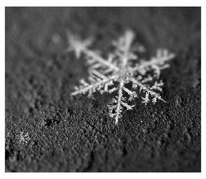 _piece_of_winter__by_fangedfem.jpg (300x261, 18Kb)
