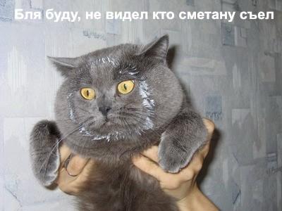 cat.jpg (400x300, 45Kb)