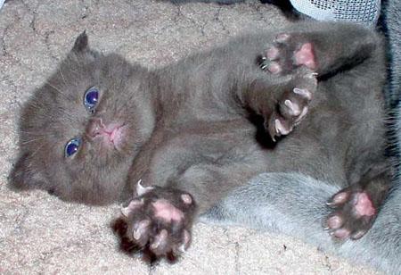 kitten.jpg (450x308, 62Kb)