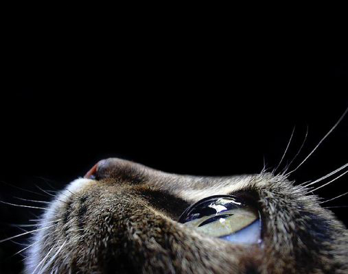 normal_cat.jpeg (507x400, 82Kb)