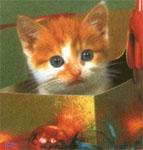 cat4_m.jpg (143x150, 11Kb)