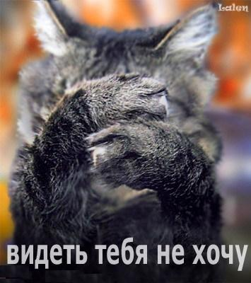 videttebnehhoccy.jpg (355x400, 34Kb)