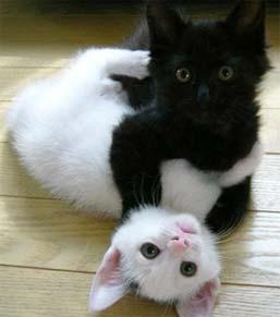 twincats.jpg (257x291, 9Kb)