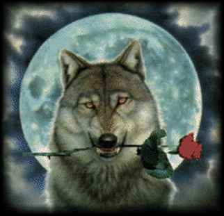 = wolf_with_rose =.jpg (322x311, 9Kb)