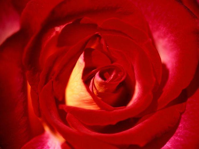 http://img.liveinternet.ru/images/attach/1/4405/4405039_614.jpg