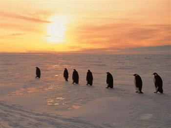 penguins6pa.jpg (350x263, 10Kb)