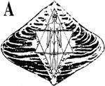 merkaba.jpg (150x124, 7Kb)