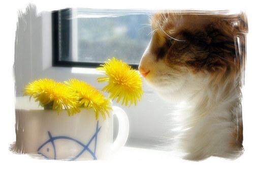 Кошка и одуванчики.jpg (500x338, 40Kb)