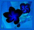 f_1200810_small.jpg (115x100, 16Kb)