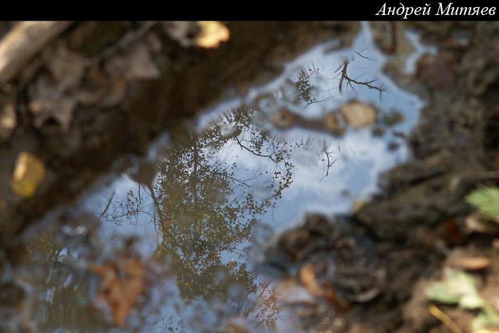 PICT5521_cr.jpg (700x467, 87Kb)