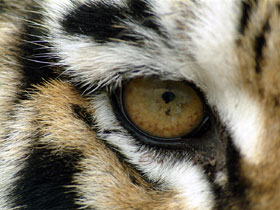глаз.jpg (280x210, 20Kb)