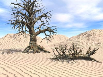deadwood.jpg (400x300, 46Kb)