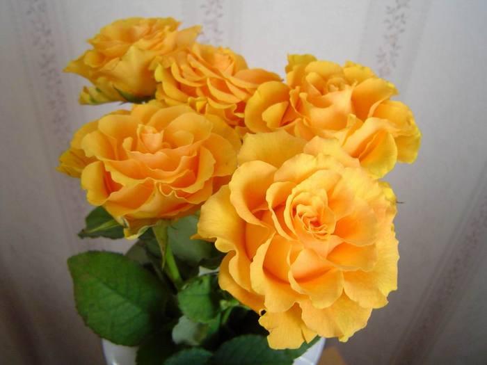 http://img.liveinternet.ru/images/attach/1/4668/4668019_6167_ext.jpg