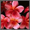 3794225_flower_hot_bases181.jpg (100x100, 5Kb)