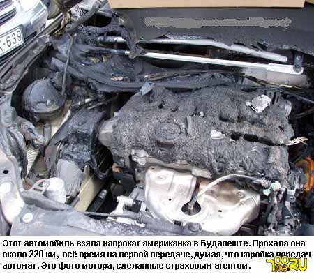 vot_pindoski_kretinki_13894.jpeg (450x400, 46Kb)