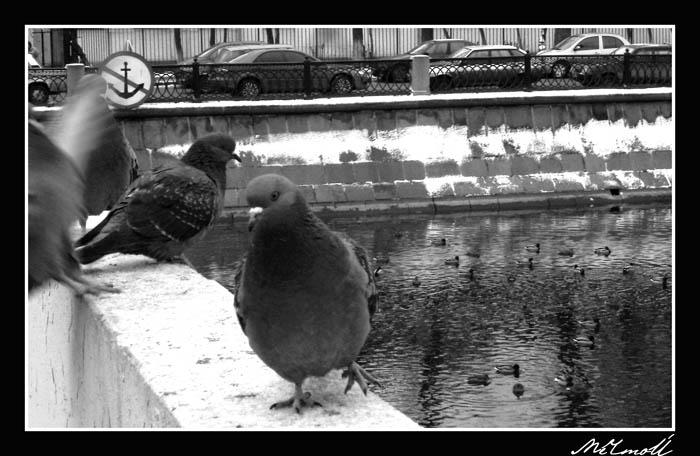 птицы.jpg (700x456, 86Kb)