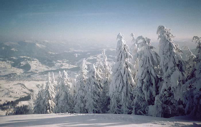 Снежные елки.jpg (700x445, 43Kb)