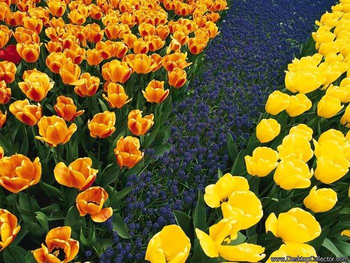 Flowers_01.jpg (700x525, 97Kb)