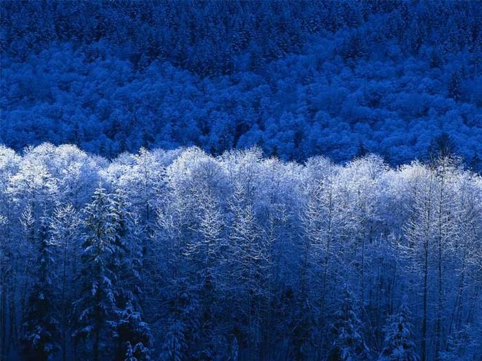 Зима.jpg (700x525, 146Kb)