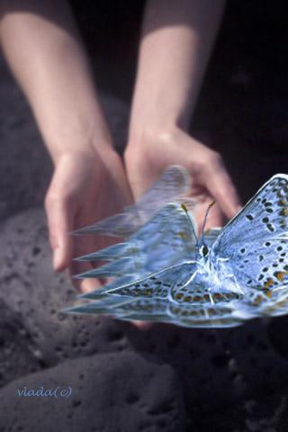 Butterfly in hands.jpg (320x480, 37Kb)