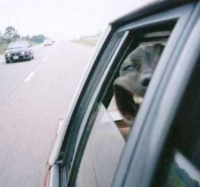 собака.jpg (392x367, 16Kb)