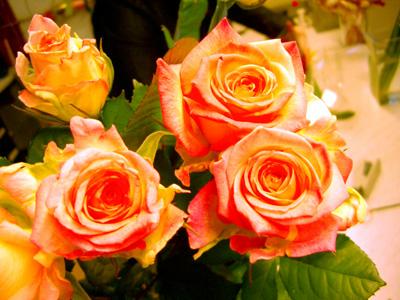 flowersea17.jpg (400x300, 78Kb)