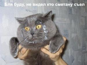кот и сметана.jpg (300x225, 23Kb)