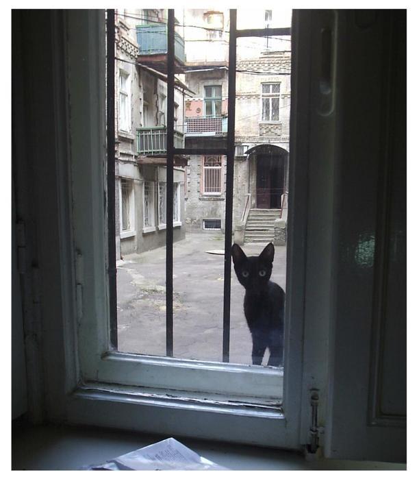 окно во двор.JPG (612x699, 48Kb)