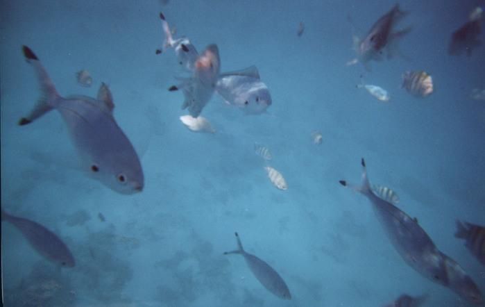 fish1.jpg (699x442, 64Kb)