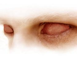 Albino_1024x768.jpg (250x189, 26Kb)