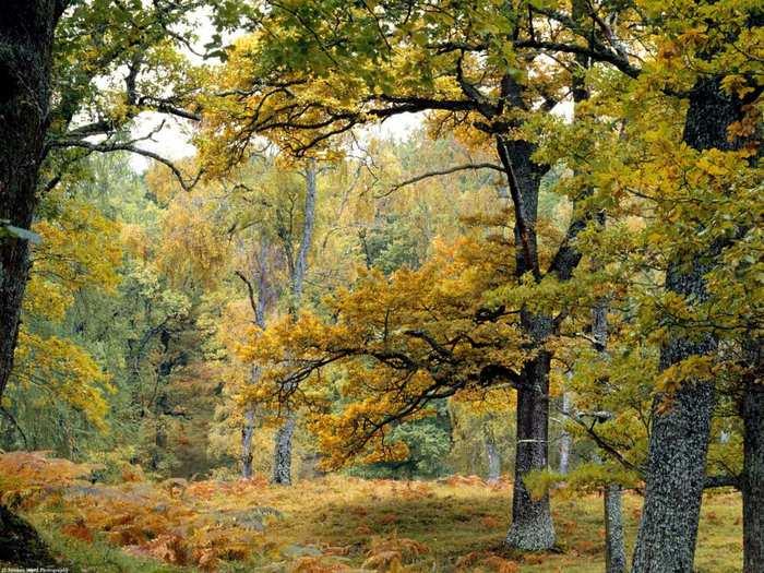 http://img.liveinternet.ru/images/attach/1/9665/9665249_2249053pxy.jpg