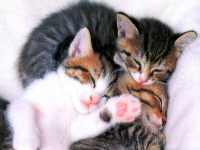 Животные Коты.
