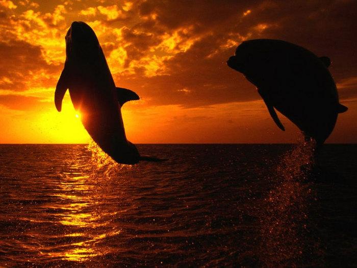 12. дельфины. темы.  Вторник, 06 сентября 2011. животные. романс & реал...