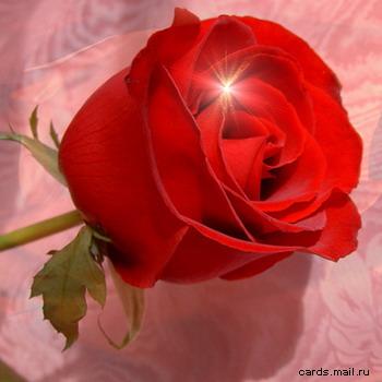 роза....jpg (350x350, 37Kb)