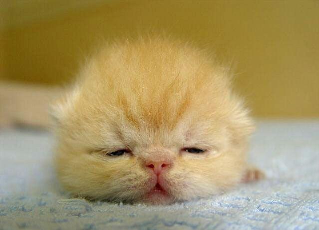 baby_animals_7.jpg (639x461, 24Kb)