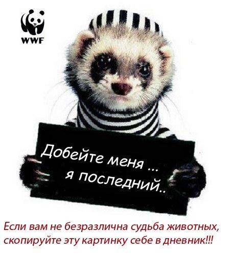 4954511_4930731_WWF.jpg (460x500, 43Kb)