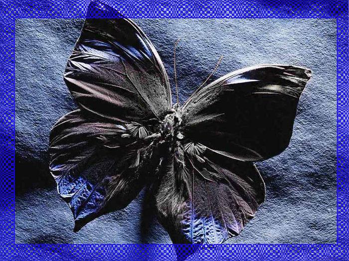 бабочка.jpg (700x525, 310Kb)