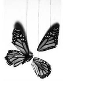 бабочка.jpg (300x335, 19Kb)