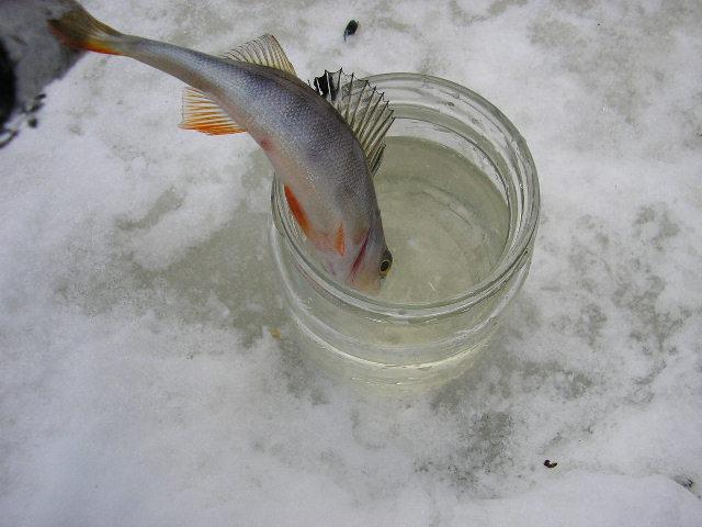 Рыбалка 009.jpg (640x480, 63Kb)