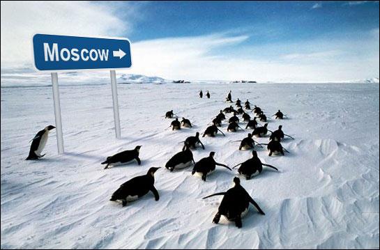 5128031_5127717_penguins.jpg (545x359, 48Kb)
