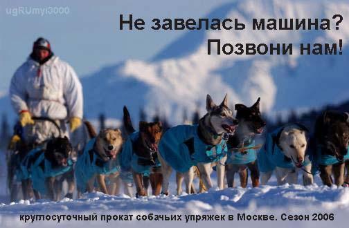 dogs.jpg (504x330, 53Kb)
