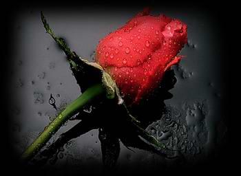 роза.jpg (350x256, 10Kb)