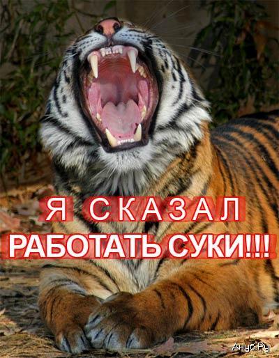 тигр работать суки.jpg (400x514, 48Kb)
